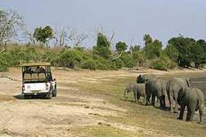 Chobe game safari day tour botswana